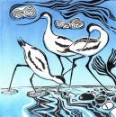 Pied beauties-Avocets